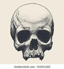 Vector hand drawn skull