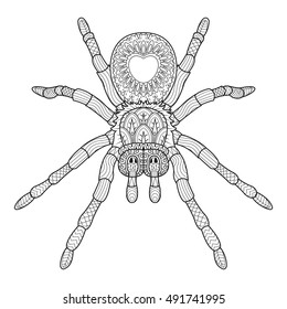 Vector hand drawn spider in zentangle style. Doodle sketch for tattoo, print or t-shirt. vector illustration.