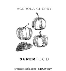 Vector hand drawn superfood Illustration with acerola cherry. Sketch vintage style. Design template.