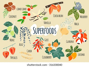 Vector hand drawn superfoods. Fresh fruits sketch background. Illustration for your design.