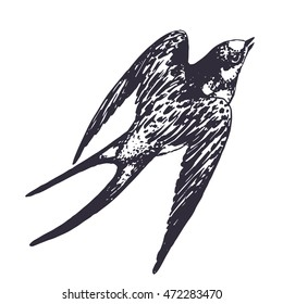 Vector hand drawn swallow bird illustration. Flying swift detailed sketch, beautiful animal in the wild