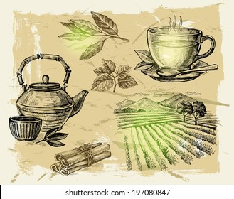 vector hand drawn tea on paint background