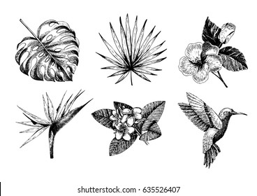 Vector hand drawn tropical plant icons. Exotic engraved leaves and flowers. Monstera, livistona palm leaves, bird of paradise, plumeria, hibiscus, hummingbird. Use for exotic beach, wedding, party