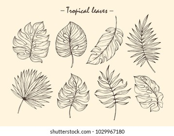 Vector hand drawn tropical plants. Tropical collection. Botanical hand drawn illustration in sketch style. Template design for sail, wedding save date, envelope, valentine, for party, holiday decor.