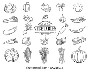 Vector hand drawn vegetables icons set. Decorative retro style collection farm product restaurant menu, market label.