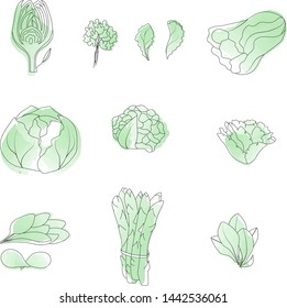 Vector hand drawn vegetables. Outine watercolor style green vegetables collection.