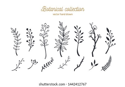 Vector hand drawn vintage floral elements. Set of forest doodle flowers and brunches for Wedding, Birthday and cards decor