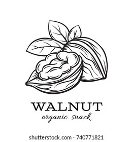 Vector hand drawn walnut for template label, packing and emblem farmer market design. Retro sketch style.