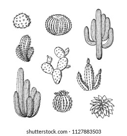 Vector hand drawn wild cacti plants set. Succulent cactus desert plants isolated on white backgrund. Different types of cacti collection illustration