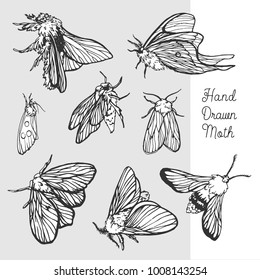 vector handdrawn black moth