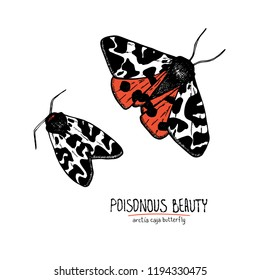 Vector handdrawn illustration of poisonous arctia caja butterfly with handdrawn text. Poisonous beauty. Can be used for cards, prints, tattoo