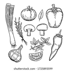 Vector hand-drawn illustration set of vegetables: tomato, pepper, hot pepper, onion, garlic, mushrooms, basil, thyme, hand-drawn in doodle style, great elements in good quality.