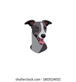 Vector head of an Italian Greyhound dog breed