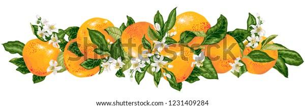 https://image.shutterstock.com/image-vector/vector-headline-decor-elementwith-grapefruit-600w-1231409284.jpg