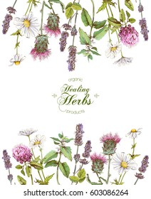 Vector healing flowers and herbs frame on white background.With place for text