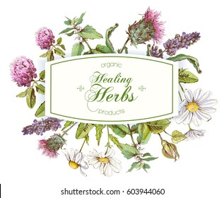 Vector healing herbs horizontal banner on white background. With place for text