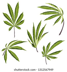 Vector Hemp plant illustrations set of 5 leaves of green cannabis isolated clip art
