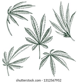Vector Hemp plant illustrations set of 5 leaves of black and white cannabis isolated clip art