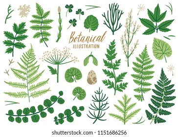 Vector herb collection with ferns, clover leaves, maple seed, dandelion seeds, branches, leaves and flowers. Botanical set. Isolated on white.