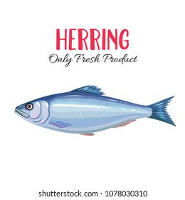 Vector herring. Icon badge fish for design seafood packaging and market.