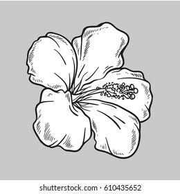 Vector Hibiscus flower. Isolated on grey background. Sketch style. Line art.