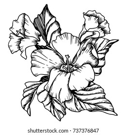 Vector hibiscus  flowers. Black-and-white solution. Drawn manually.The design is suitable for use in decoration, tattoo, textiles, invitations and promotional projects.