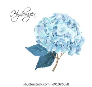 Vector highly detailed realistic illustration of blue hydrangea flower isolated on white. Can be used as wedding element, floral design for cosmetics, perfume, beauty care products, greeting cards