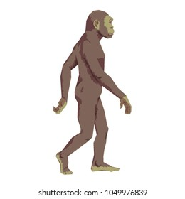 Vector homo habilis illustration