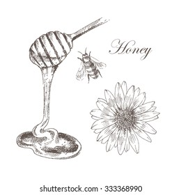 vector honey, honey cells, honey stick, bee illustration. detailed hand drawn sketch of nature objects