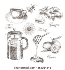 vector honey hand drawn collection. healthy set of lemon, ginger, tea