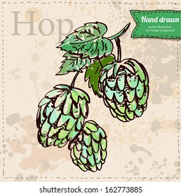 Vector hop hand drawn on vintage paper background, sketchy illustration in color isolated, oktoberfest