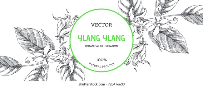 Vector horizontal background. Botanical hand drawn illustration of ylang-ylang branch. Floral texture with tropical flowers