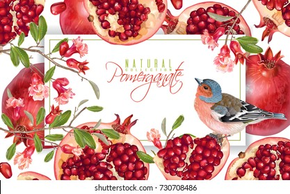 Vector horizontal banner with pomegranate fruits , branches and bird on white background. Design for cosmetics, spa, pomegranate juice, health care products, perfume. Can be used as sweets packaging