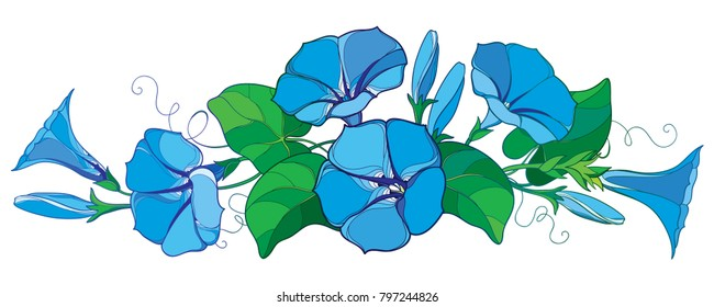 Vector horizontal bunch with outline Ipomoea or Morning glory flower bell in pastel blue, green leaf and bud isolated on white background. Perennial climbing plant in contour style for summer design.