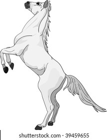 vector -horse standing on hind legs