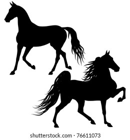 Vector horses silhouettes isolated on white background
