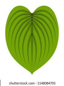 vector hosta leaf isolated on white background