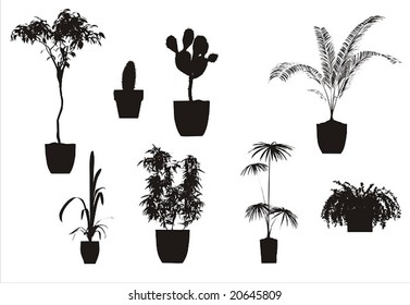 the vector houseplant collection
