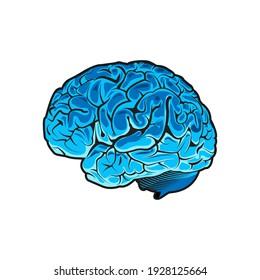 Vector human brain on white background