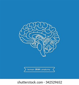 Vector human brain views. Isolated brain cross section. Illustration of human brain for medical design, study or concept for logo design. Easy recolor. Vector human brain. Logo brain.