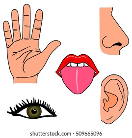 Vector Human Five Senses Set Hand Stock Vector (Royalty Free ...