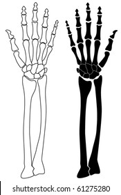 vector human skeleton hand