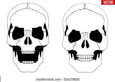 Vector Human skull with open mouth in sketch style. Illustration isolated on background