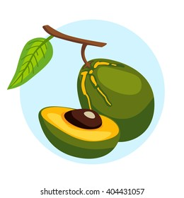 Vector icon of branch with lucuma fruits. Eco organic diet superfood. Exotic fruit Pouteria lucuma.