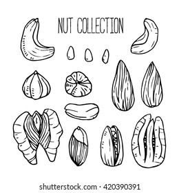 Vector icon collection with different nuts. Black on white background. Element for your food design. Cashew, walnuts, pecans, peanuts, hazelnuts, almonds, pistachios and pine nuts.