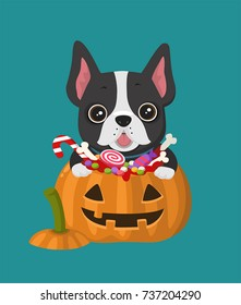 Vector Icon dog breed French Bulldog. Frenchie Puppy is sitting in a Halloween pumpkin with sweets.