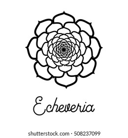 Vector icon with Echeveria. Hand drawn succulent for logo, sign, corporate identity.