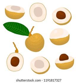 Vector icon illustration logo for whole ripe fruit yellow longan, slice half dimocarpus. Longan pattern consisting of natural design tropical tasty food. Eat sweet fresh raw fruits exotic longan.