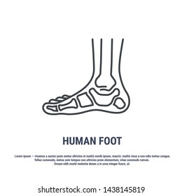 Vector icon. Line design. Human foot. Bones and structure. Medicine and anatomy. Anatomical structure of man. Symbol, element, sign, logo, emblem. Concept illustration.