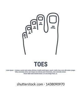 Vector icon. Line design.Toes and foot. Anatomical structure of man. Disease and treatment. Symbol, element, sign, logo, emblem. Concept illustration.